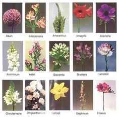Tipos de Flores 2