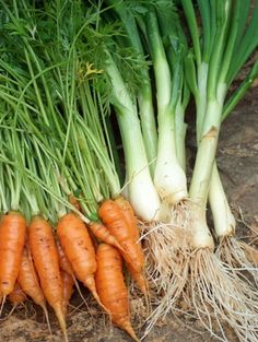 Vegetables that like to grow together.