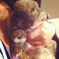 Easter Bunny Giorgio ☺️