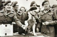 In this photo released Thursday Oct. 25, 2012 by The People's Dispensary for Sick Animals (PDSA) who are the awarding body responsible for the Dickin Medal for animal gallantry. Crossbred collie dog named Rob, that made over 20 parachute jumps while on secret war-work, and took part in the North African landings, after being presented with the Dickin Medal for animal gallantry, in this Feb. 13, 1945 file photo.