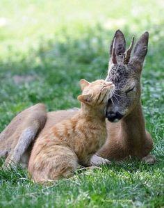 Kittie love!