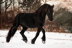 Friesian by vadalein.deviantart.com on @deviantART