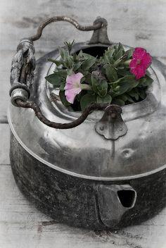Old teapot planter.