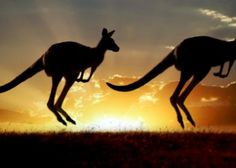 A Expat Guide For Moving To Australia