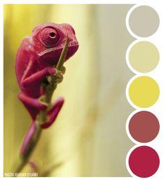 Pastel Feather Studio: CHAMELEON BLUSH - color palette