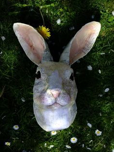 I need to learn how to make  paper mache animal heads
