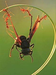 I really don't like ants but I admire their strength