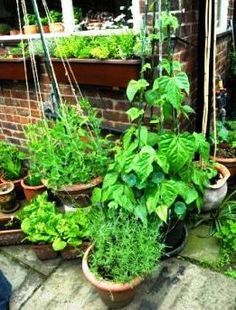potted veggie garden