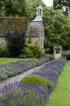 We would talk a walk everyday if we could stroll down this #lavender lined pathway!