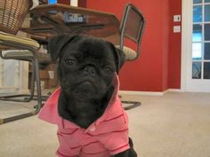 Now this is your playboy puppy!