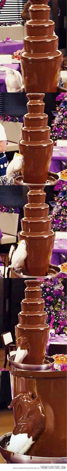 chocolate fountains, animals, dream, pet, bird baths, chocolate covered, parrot, thought, birds