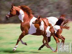 Like Momma, like foal!