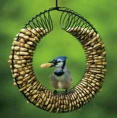 DIY Bird Feeder - A wire hanger, slinky and some peanuts.