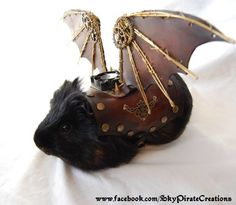 Guinea pig wearing leather Steampunk wings... YES!