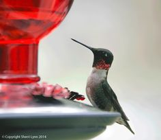 tips for how to attract hummingbirds