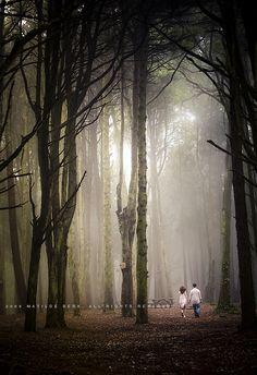 tree, engagement photos, forest, engagement shoots, place, light, walk, portrait, photographi