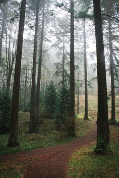 Forest Park, Portland...one of the largest city forest  parks in the country.