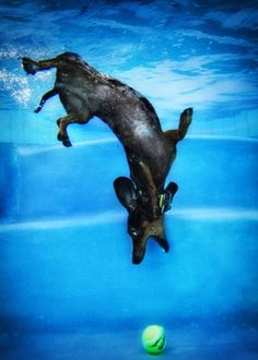 Underwater dogs: Photography by Seth Casteel