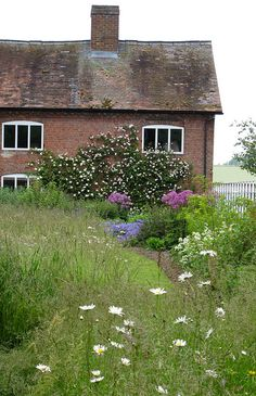 Cottage with daisies and climbing roses in Shropshire, England