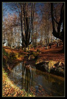 Manto otoñal #Euskadi #Basquecountry #Paysbasque #Paisvasco #Gorbea #Otoño