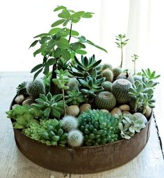 Succulent garden planted in a round metal planter