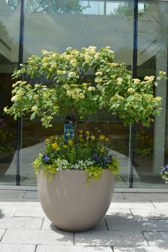 A Pagoda dogwood makes an impression in this container garden at The Morton Arboretum.