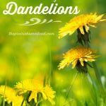 16 Ways to Eat Dandelions
