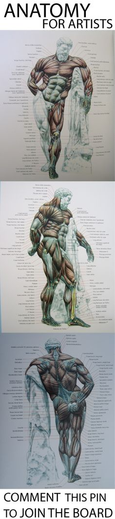 anatomy & tutorials for artists.