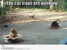 The cat traps are working! You can always count on boxes and paper bags! lol!