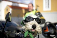 A dog in the 'Portugal de Les-a-Les' is dressed up near Vila Nova de Gaia on June 9 (© Estela Silva/EPA)