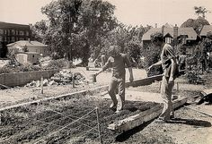 Planting a Community Garden in People's Park, Berkeley, California -- May 1969 #throwback