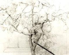 http://25.media.tumblr.com/tumblr_mafhwdzd0O1rbas6ao1_1280.jpg lópez garcía, draw ii, art galeria, quinc tree, antonio lopez garcia, antonio lópez