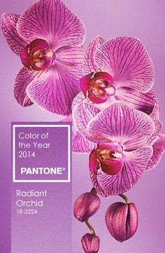 Pantone Color of the Year 2014 | Radiant Orchid 18-3224 http://www.theperfectpalette.com/2013/12/pantone-color-of-year-2014-radiant.html