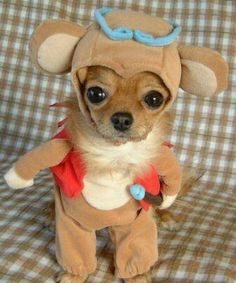 funny dogs, cutest babies, halloween costumes, animal costumes, pet, dog costumes, halloween outfits, little dogs, furry friends