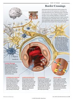"Border Crossings [Illustration by Emily Cooper, for ""Breaking the Brain Barrier"" by Jeneen Interlandi, Scientific American, June 2013]"
