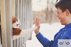 cats, high five, awkward moments, anim, funny pics, friends, pet, funni, kittens