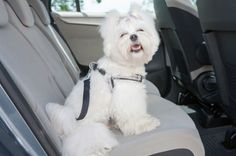 The pros and cons of pet safety harnesses
