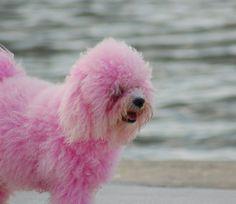 Pink Doggie