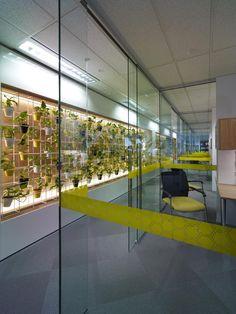 DLA Piper, Perth. Corridor wall treatment, indoor wall garden