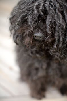 Our puli- Fani
