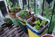 How sub-irrigated containers work. Urban Organic Gardener. Fire Escape Vegetable Garden in Manhattan. May 23, 2009. by canarsiebk, via Flickr.