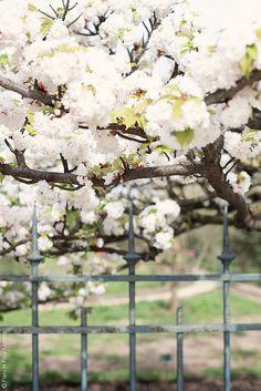 Jardin des Plantes by Paris in Four Months
