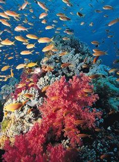 El Parque Nacional Corales del Rosario, Colombia