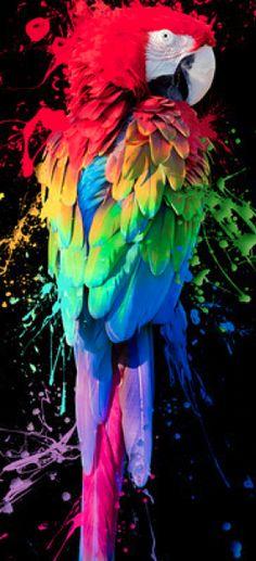 colour, colorful birds, anim, rainbows, rainbow colors