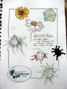 Sketchbook ~ Austin by janelafazio, via Flickr