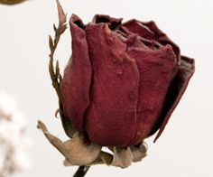 Spectacular dried roses.
