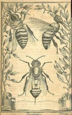 Melissographia by Francesco Stelluti, 1624