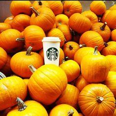pumpkin spice latte | photo from Starbucks