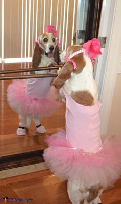 Basset Ballerinas - Halloween Costume Contest via @costumeworks