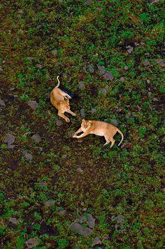 Kenya, Masai Mara National Reserve